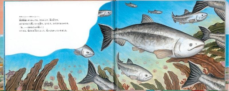 ピリカ、おかあさんへの旅|鮭たち
